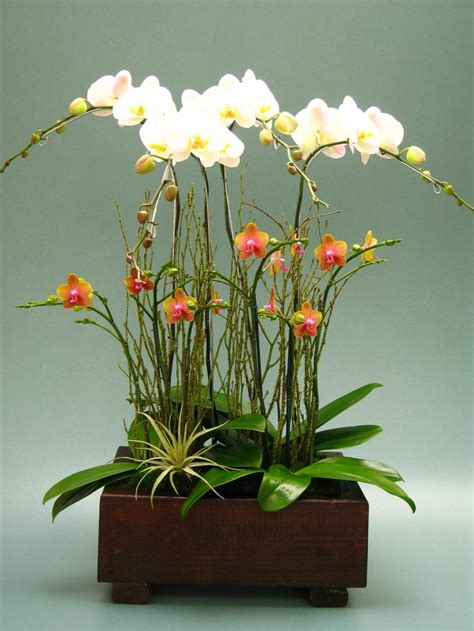How To Arrange Orchids In A Vase orchid arrangement our orchids ikebana i and it