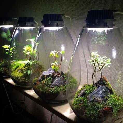 terrarium beleuchtung led best 25 terrarium le ideas on