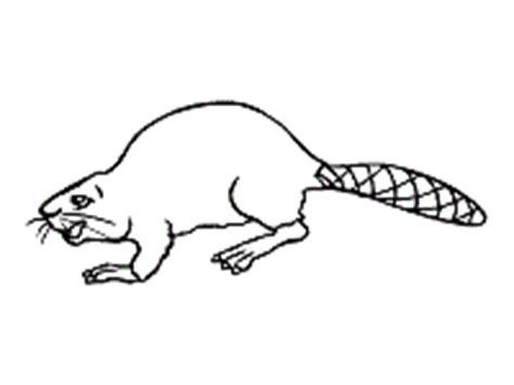 beaver coloring pages preschool beavers coloring pages and printable activities