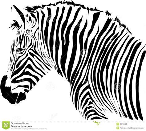 zebra illustration stock photography image 36265822