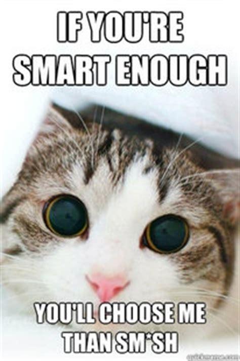 Cute Cat Meme Generator - memes quickmeme