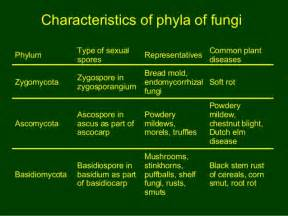 Importance Of Plant Diseases - 10 fungi