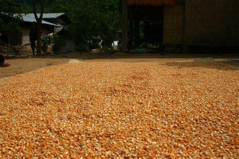 grain market maize lentil sorghum beans products