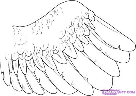 owl wings coloring page how to draw a wing step by step birds animals free