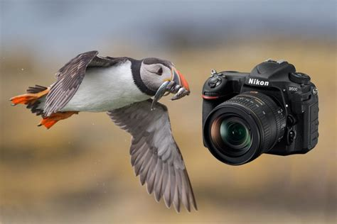 Landscape Photography Gear Nikon Nikon D500 Review In The Of A Wildlife Photographer