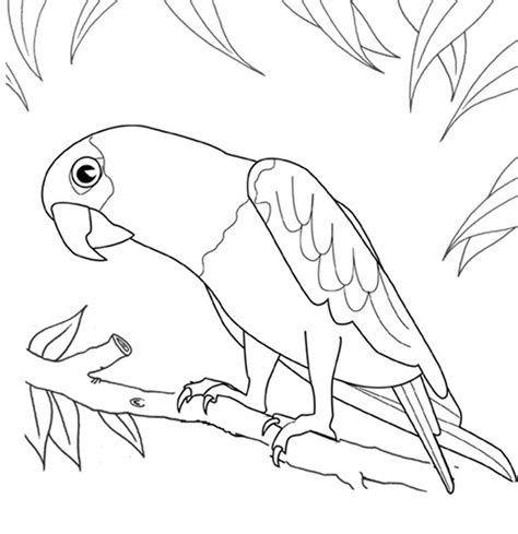 coloring pages coloring book special coloring pages of parrots 49 2554
