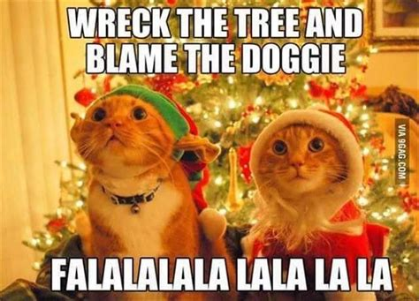 funny christmas animal pictures www pixshark com