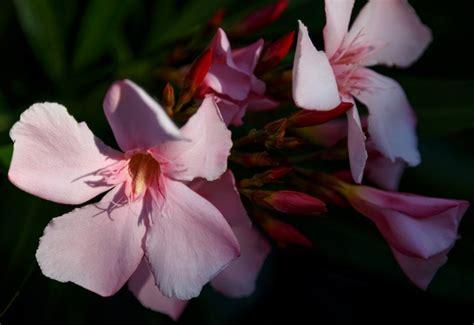 tanaman hias  memang cantik sih tapi bikin sakit