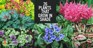 Lilies After Flowering - 25 gorgeous plants that grow in shaded area in your garden