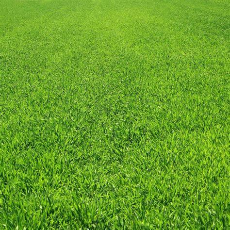 pemandangan rumput hijau wallpapersc android