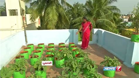 vegetables grown in growing vegetables in pots and in garden mybktouch