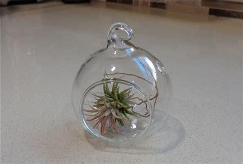 Mini Terrarium 2 mini 2 quot glass plant orb terrarium