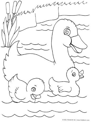 ducks unlimited coloring page ducks unlimited pencil coloring pages