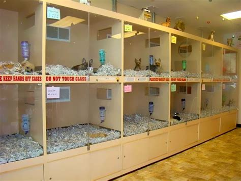 puppy stores new jersey passes new that requires pet stores to sell only rescue animals bored