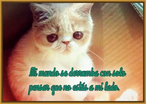 imagenes de gatos tristes con mensajes imagenes de gatos tiernos con frases tristes
