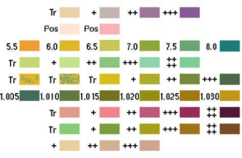 protein 500 in urine urinalysis