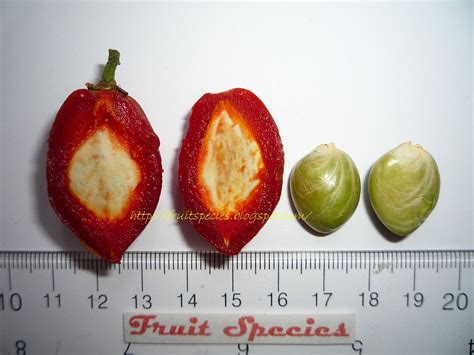 fruit species peanut butter fruit