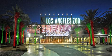 la zoo lights hours l a zoo lights electrifies guests transforms into