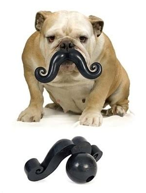 The Moustache Is A Goner by 27 Best Images About Silly And Boxer Dogs On