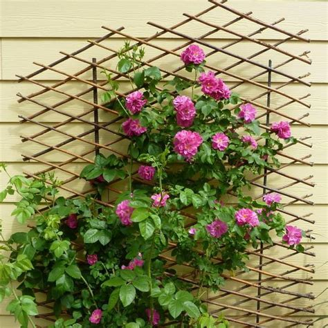 small climbing plants 33 small balcony designs and beautiful ideas for