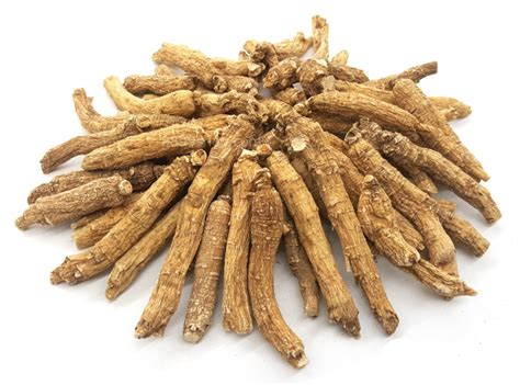 American Ginseng american ginseng roots food for health