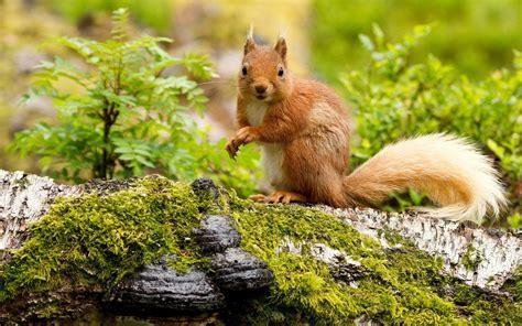 eichhörnchen im herbst 5659 die 79 besten tiere hintergrundbilder