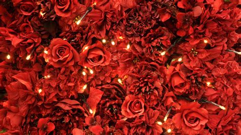 red roses lights wallpapers hd wallpapers id
