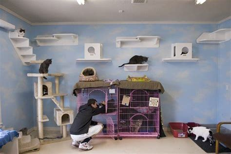 Cat Room Ideas by Pin By Dean On Craft