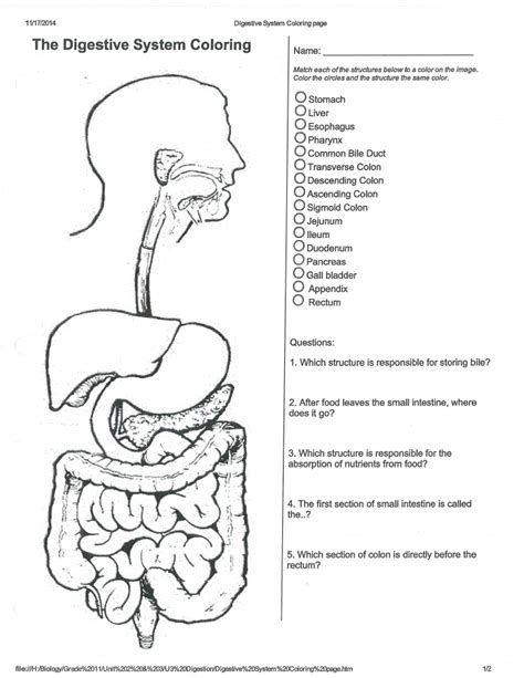 digestive system coloring page key digestion and nutrition worksheet answer key 5