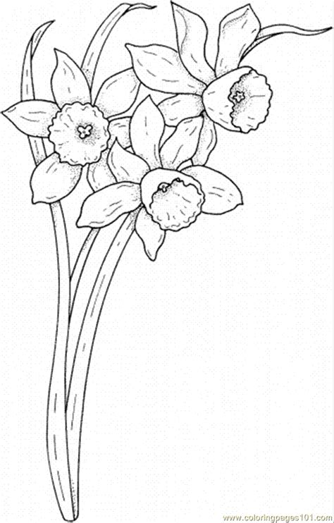 coloring pages daffodil flowers daffodil flower coloring pages