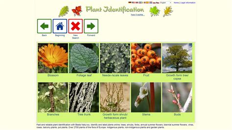 biggest online plants store plant identification worldwide android apps on google play