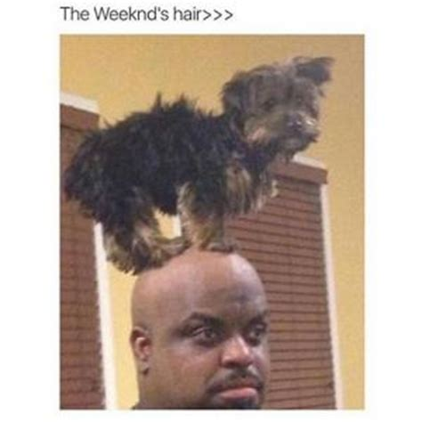 The Weeknd Hair Meme - funny memes 2015 kappit