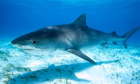 are sharks color blind sharks may be colour blind and less likely to attack a