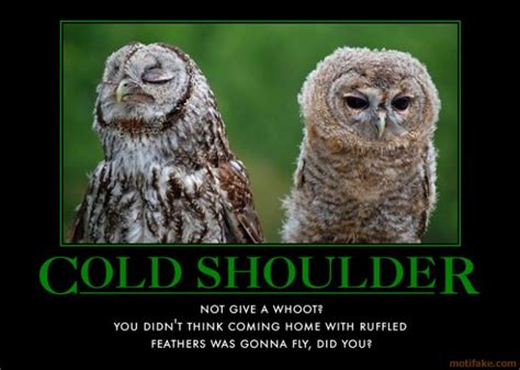 Cold Shoulder Meme - mfs the other news 24 october 2010