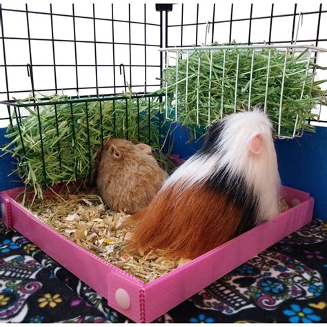 Hay Rack For Guinea Pig Cage by Small Hayrack Hayware C C Cages For Guinea Pigs