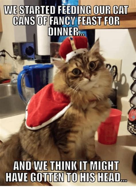 Fancy Feast Meme - funny cats memes of 2016 on sizzle animals