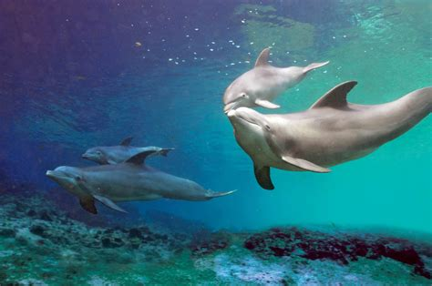 dolphin  dolphin quest