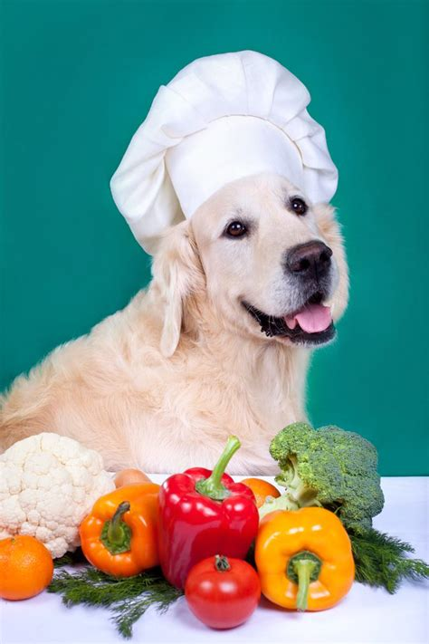 vegetables that are for dogs unsafe vegetables for dogs cuteness