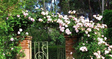 Rosas De Jardin #2: Tipos-de-rosas-16.jpg