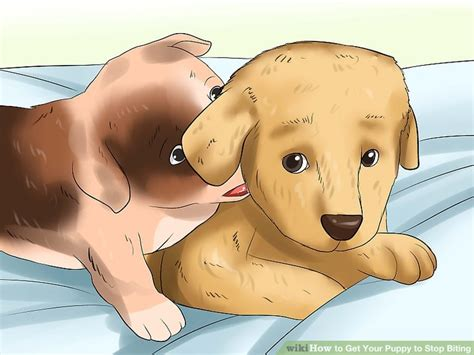 how to get your puppy to stop biting 4 ways to get your puppy to stop biting wikihow