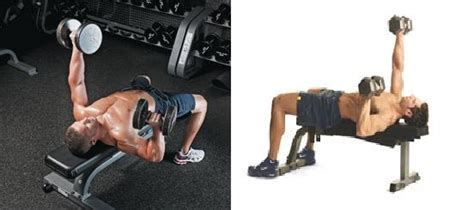 only bench press for chest chest exercise flat bench alternating dumbbell press