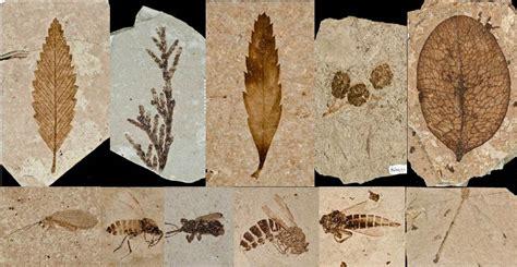 florissant fossil beds paleontology program florissant fossil beds national