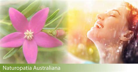 fiori australiani elenco webinar series fiori australiani energia femminile