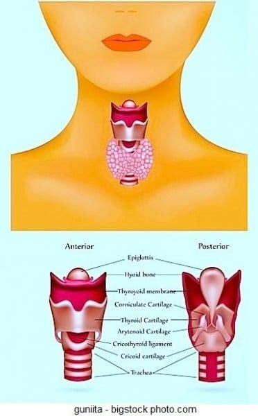 alimentazione per tiroide tiroide ingrossata dieta e ipotiroidismo