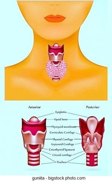 alimentazione e ipertiroidismo tiroide ingrossata dieta e ipotiroidismo
