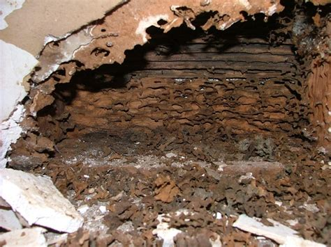 ant nest in house ant nest in house 28 images carpenter ant nest exposed horticulture and home pest