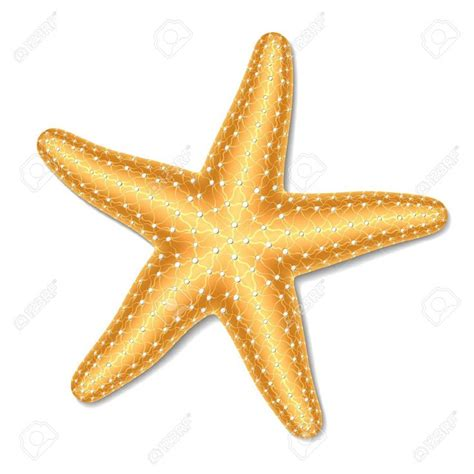 tattoo nightmares starfish 159 best sketches clip art images on pinterest feathers