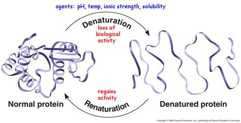 protein vs enzyme proteins function and structure