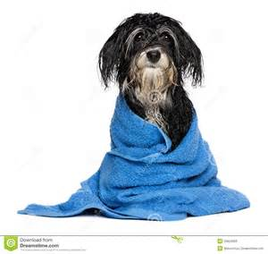 Bathtub Dogs Wet Towel Clipart Clipart Suggest