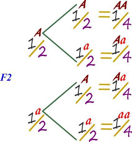 cadenas de markov resumen ciencias de joseleg el cruce monoh 237 brido sin el cuadro de